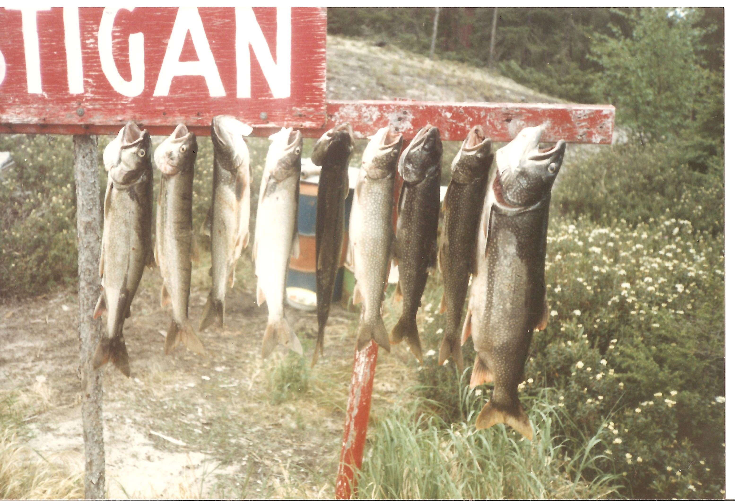 Costigan 1983 pic 4